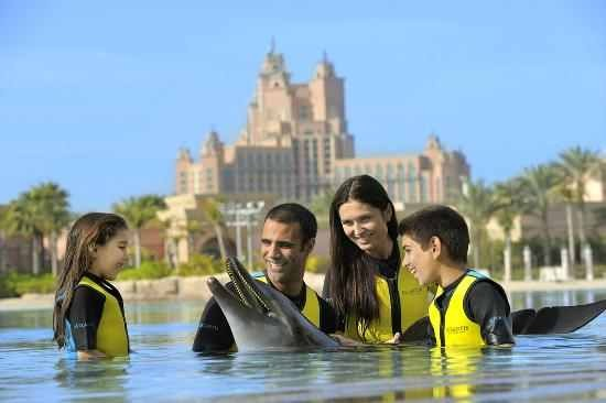 Book Bird Show Dubai & Dolphinarium Dubai Tickets 2021