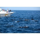 Oman Dolphins Watching Boat Tours From Muscat Port