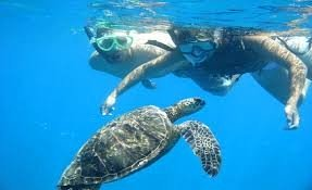 Book Marsa Alam Snorkeling at Dolphin House Port Ghalib Itinerary